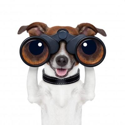 Spezielle Antibell-Halsbänder können eingesetzt werden, um Hunden das Bellen abzugewöhnen.