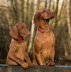 Effektive Hilfe bei der Hundeerziehung - Foto: Pixabay