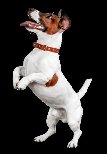 Bei der Hundeerziehung ist es besonders wichtig, dass man konsequent die richtigen Signale an den Hund sendet. Ein Erziehungshalsband für Hunde kann eine gute Ergänzung sein, sollte aber nicht als Alternative zur Erziehung gesehen werden.