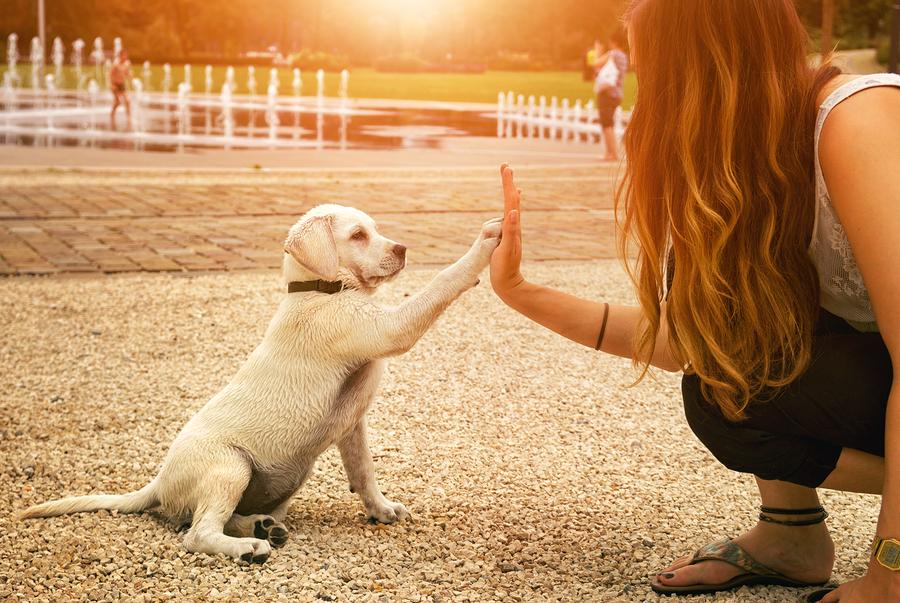 Training für Hundewelpen