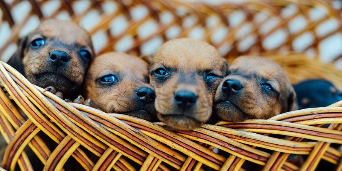 Hundewelpen kaufen – Ratgeber und Tipps