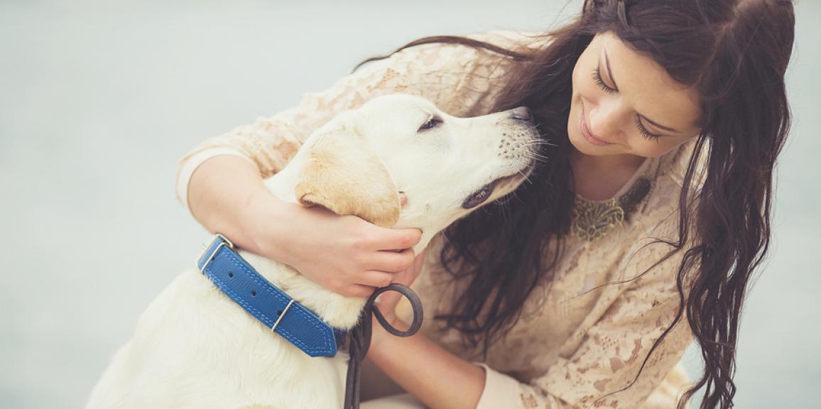 Erziehungshalsbänder für Hunde – Welche Arten gibt es?