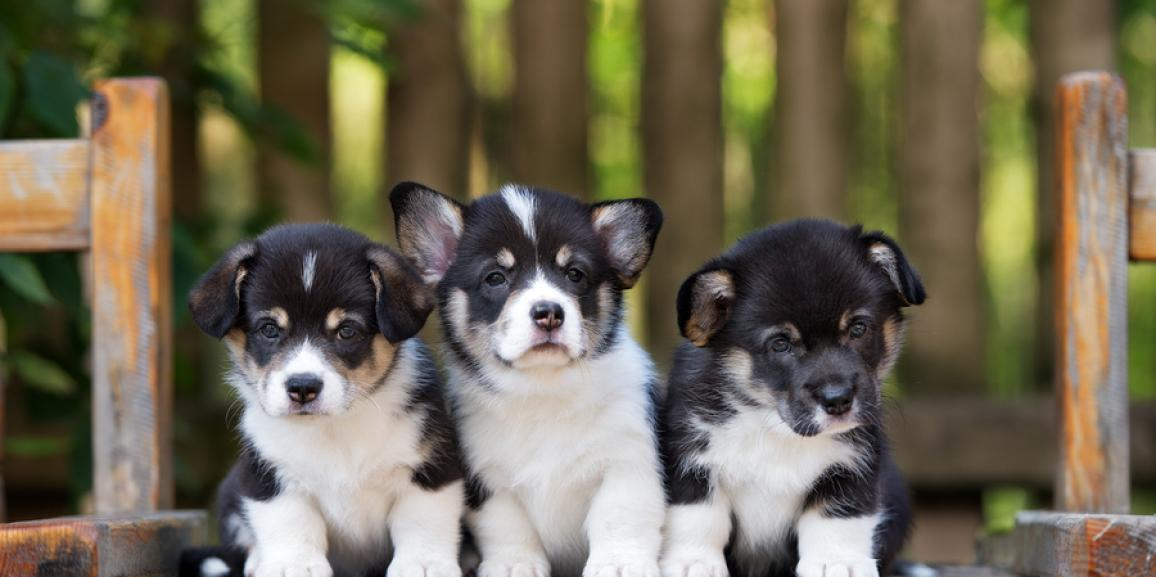 Hundewelpen stubenrein bekommen, aber wie?