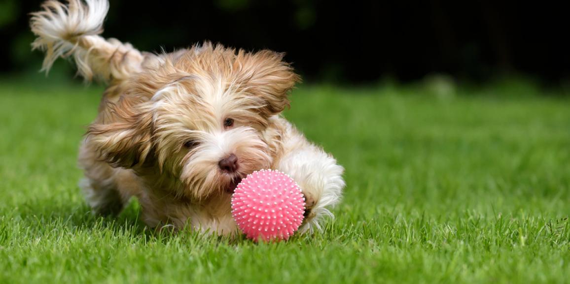 Hundespielzeug – Spielspaß für Hunde