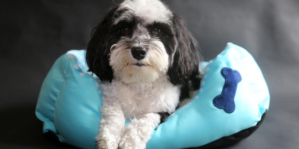 Hundekörbchen und Hundebetten
