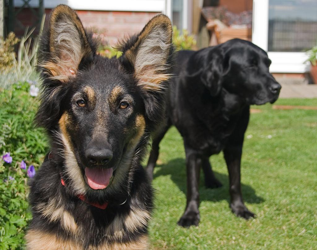 umgang mit ängstlichen hunden - Tipps