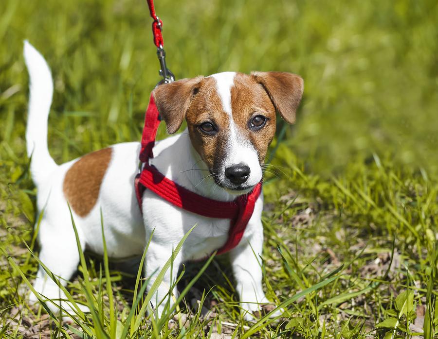 Geschirre für den Hund als Alternative zum Hunde Halsband