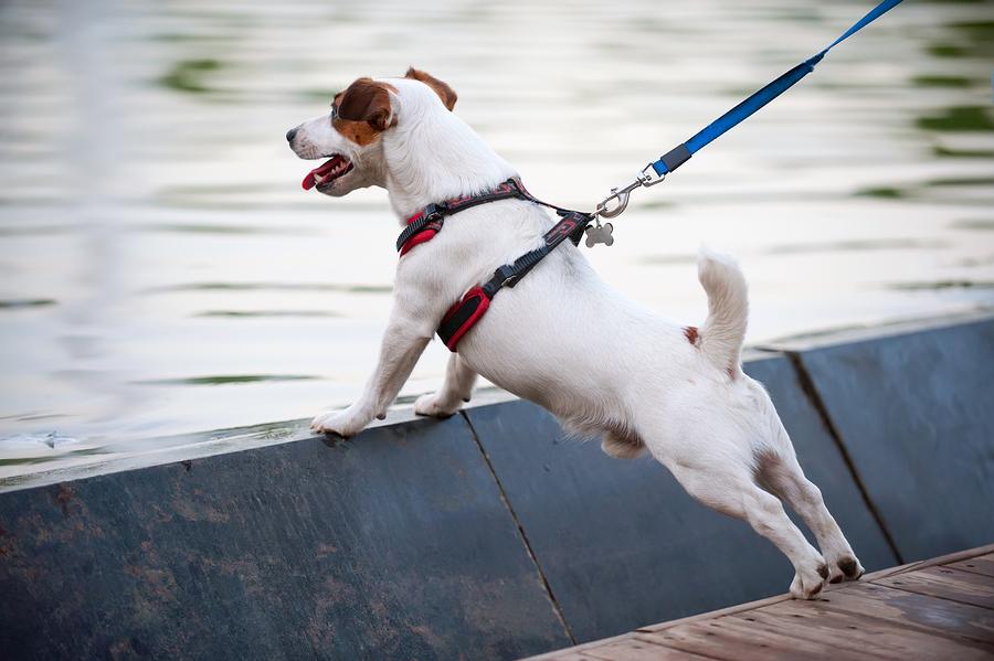 Hundegeschirr bietet Sicherheit und Komfort für Hund und Hundehalter
