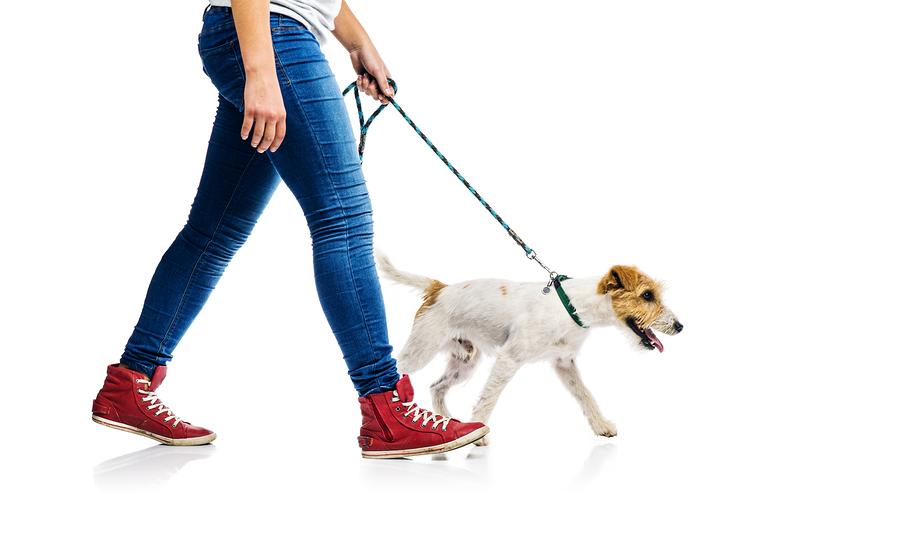 Zugstopp Halsband für den Hund