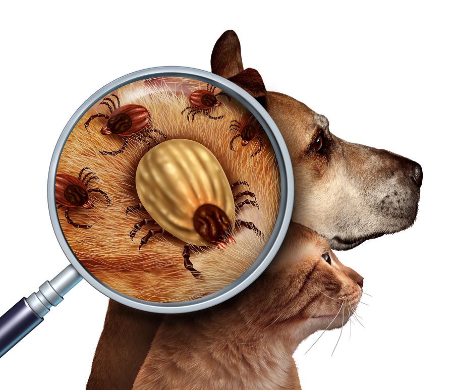 Zecken sind für Hund und Katze eine reale Gefahr. Schützen Sie Ihr Tier mit einem Zeckenschutz Halsband. Für Hunde haben sich die hochwirksamen Produkte von Scalibor bewährt. Foto: digitalista / Bigstock