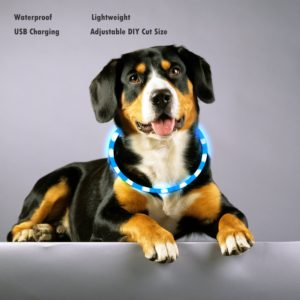LED Hundehalsband und Sicherheitshalsband von LaRoo