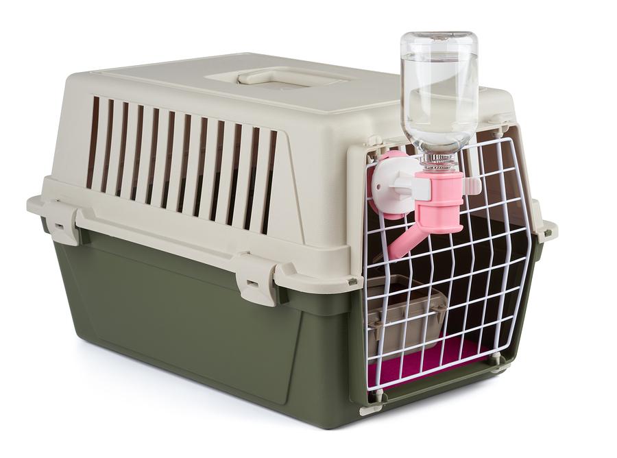 Hundebox Transport