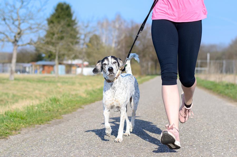 Joggingleine Hund
