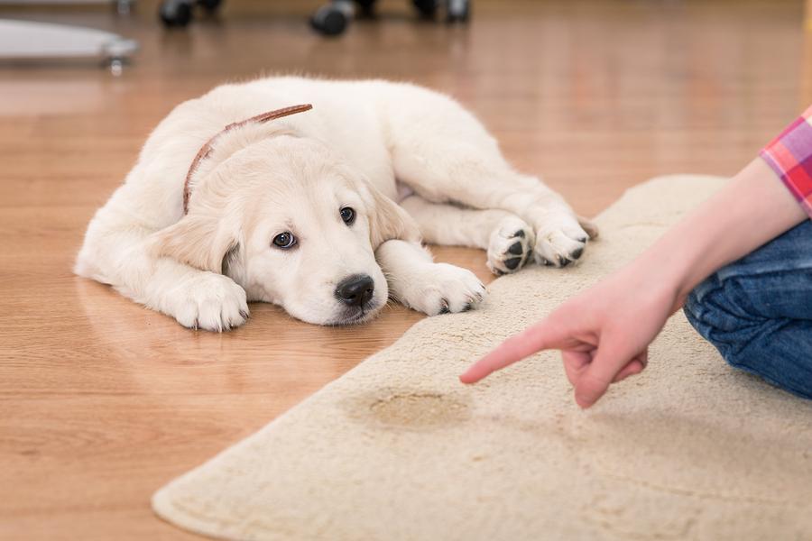 Hundewelpen stubenrein bekommen