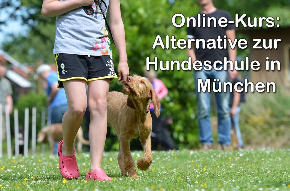 Egal ob Sie in München, Düsseldorf, Stuttgart oder Hamburg wohnen: Ein Online-Kurs ist eine interessante Alternative zur realen Hundeschule (Foto: pixabay).