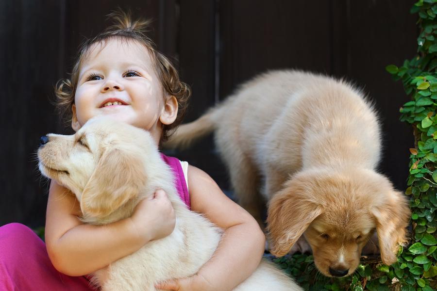 Hundewelpen kaufen