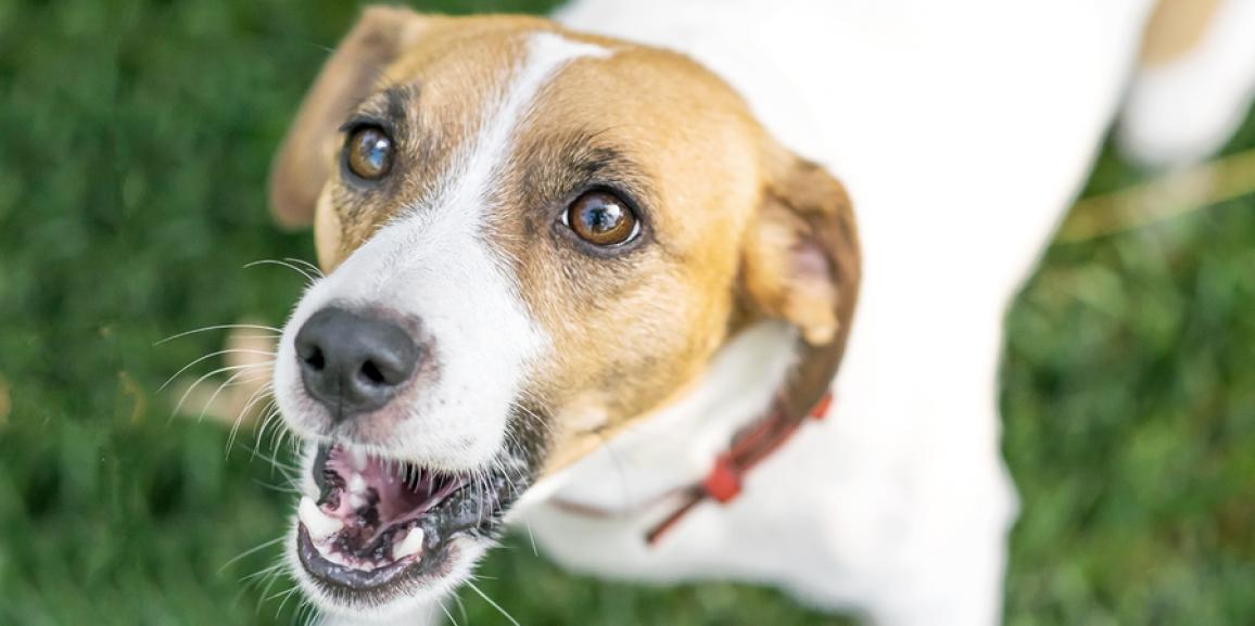 Anti Bell Training für Hunde