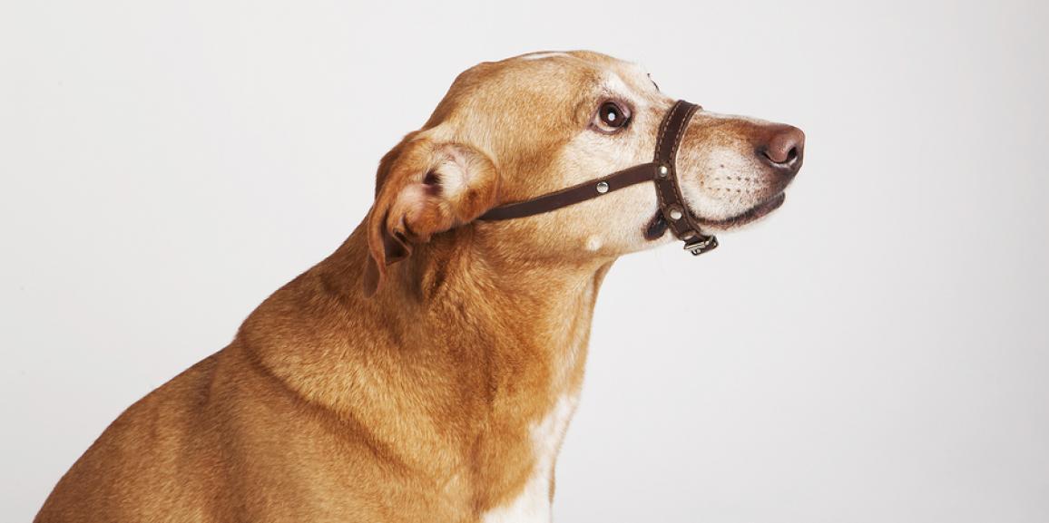 Ratgeber Halti Hundehalfter