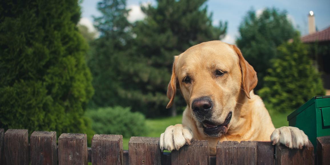 Ratgeber Hundezaun