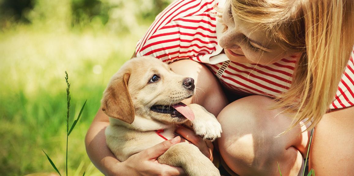 Hundeerziehung: Hilfe mein Welpe beisst – Was tun?