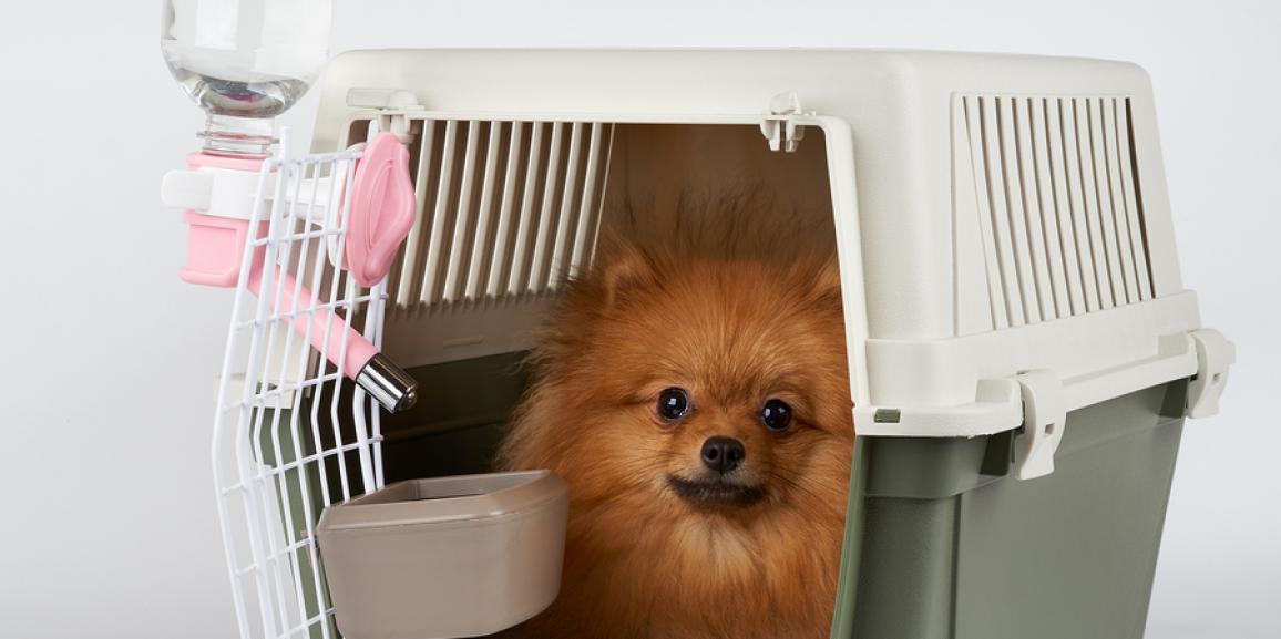 Hundetransportboxen für den sicheren Transport des Hundes